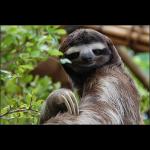 Financial Freedom Sloth
